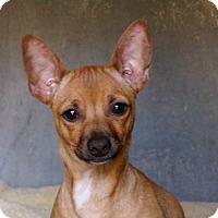 Adopt A Pet :: Petey - Chula Vista, CA