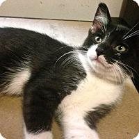 Adopt A Pet :: Ash - Toronto, ON
