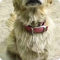Adopt A Pet :: Leiya' - BIRMINGHAM, AL