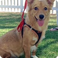 Adopt A Pet :: Teejay (A) - Santa Ana, CA
