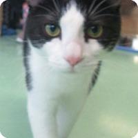Adopt A Pet :: Jo Willie - Gadsden, AL