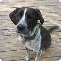 "Adopt A Pet :: Opie""I've Been Adopted"" - Minerva, OH"