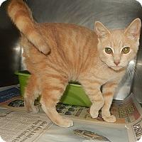 Adopt A Pet :: Rover - Newport, NC