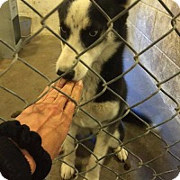 Adopt A Pet :: Nadia - Ponca City, OK