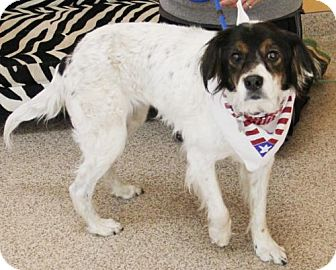 Spaniel (Unknown Type) Mix Dog for adoption in Kennesaw, Georgia - Samantha