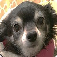 Adopt A Pet :: Winnie - Bloomington, IL