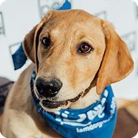 Adopt A Pet :: Charm - Cross Roads, TX