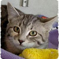 Adopt A Pet :: Mildred - Pueblo West, CO