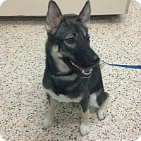 Adopt A Pet :: MAYA (DG) - Tampa, FL