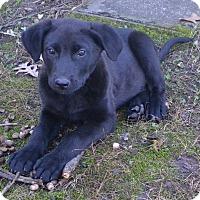 Adopt A Pet :: Leo - pending - Manchester, NH
