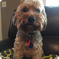 Adopt A Pet :: Buck-NEEDS A HOSPICE FOSTER - Wilmington, DE