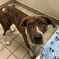Adopt A Pet :: Leo (Westhampton) - New York, NY