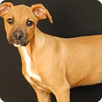 Adopt A Pet :: Jazzee - Newland, NC