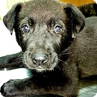 Adopt A Pet :: Diesel - Rutherfordton, NC