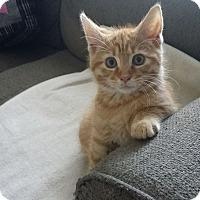 Adopt A Pet :: Toby - Greer, SC