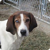 Adopt A Pet :: Slugger - Liberty Center, OH