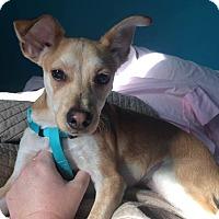 Adopt A Pet :: Mark (reduced fee) - Washington, DC