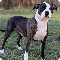 Adopt A Pet :: Opal - Waldorf, MD