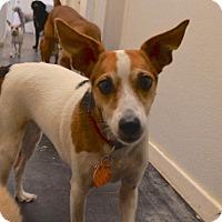 Adopt A Pet :: Bubbles - Austin, TX