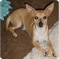 Adopt A Pet :: Jake - Only $95 adoption fee! - Litchfield Park, AZ
