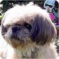 Adopt A Pet :: Cesar-NC - Mays Landing, NJ