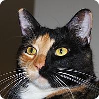 Adopt A Pet :: Mama Jo - North Branford, CT