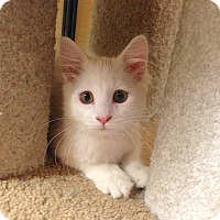 Adopt A Pet :: Casper - Foothill Ranch, CA