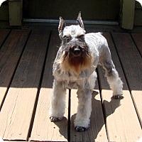 Adopt A Pet :: Aurora - Southeastern, KS