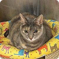 Adopt A Pet :: Persia - Colmar, PA