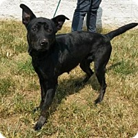 Shepherd (Unknown Type) Mix Dog for adoption in Fincastle, Virginia - Zeva