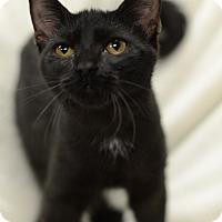 Adopt A Pet :: Lavista151703 - Atlanta, GA