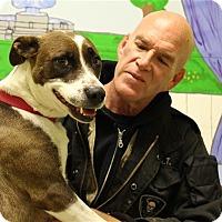 Adopt A Pet :: Gerdie - Elyria, OH
