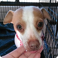 Adopt A Pet :: Rose - Daleville, AL