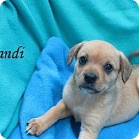 Adopt A Pet :: Brandi - Bartonsville, PA