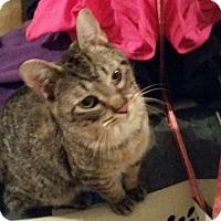 Adopt A Pet :: Milo - Bourbonnais, IL