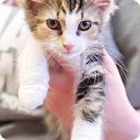 Adopt A Pet :: Delinore - Homewood, AL