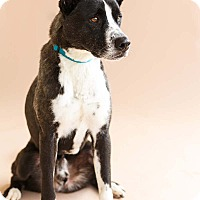 Adopt A Pet :: Buckley - Marietta, GA