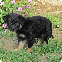 Adopt A Pet :: FARRAH - Bedminster, NJ