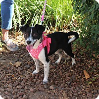 Adopt A Pet :: Martha - Yuba City, CA