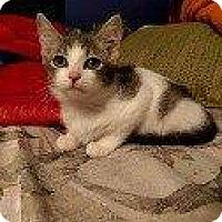 Adopt A Pet :: OLIVIA - Hampton, VA