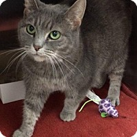 Adopt A Pet :: Smokey - Mount Airy, NC