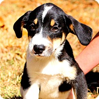 Adopt A Pet :: Magoo~ meet me! - Glastonbury, CT
