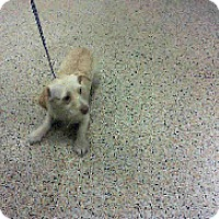 Adopt A Pet :: Iceman - Manhattan, NY