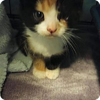 Adopt A Pet :: Josie (Fostered Marcie N) - Troy, IL