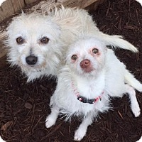 Adopt A Pet :: Angel and Pinkie - Houston, TX