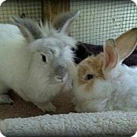Adopt A Pet :: Maryann & Bella - Williston, FL
