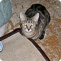 Adopt A Pet :: Serena - Scottsdale, AZ