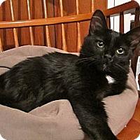 Adopt A Pet :: Luna - Lafayette, CA