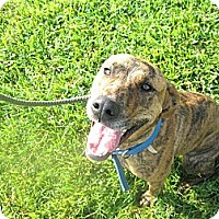 Adopt A Pet :: #415-13 ADOPTED! - Zanesville, OH