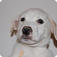 Adopt A Pet :: Kiwi - Coral Springs, FL